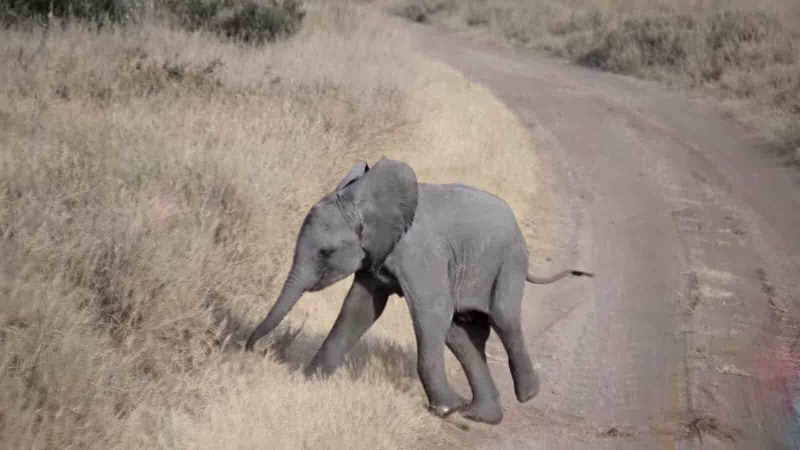 Vídeo: elefantinho faz birra e adultos reagem da melhor maneira possível. Foto: Reprodução Youtube