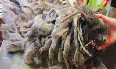 Gato é abandonado em abrigo depois de sofrer maus tratos durante anos