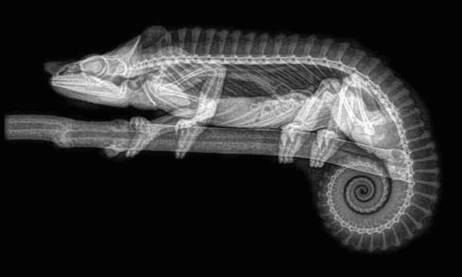 Como você nunca viu: zoo divulga imagens incríveis de radiografias de animais