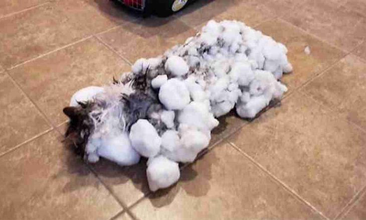Gata é descongelada por veterinários e escapa da morte nos Estados Unidos