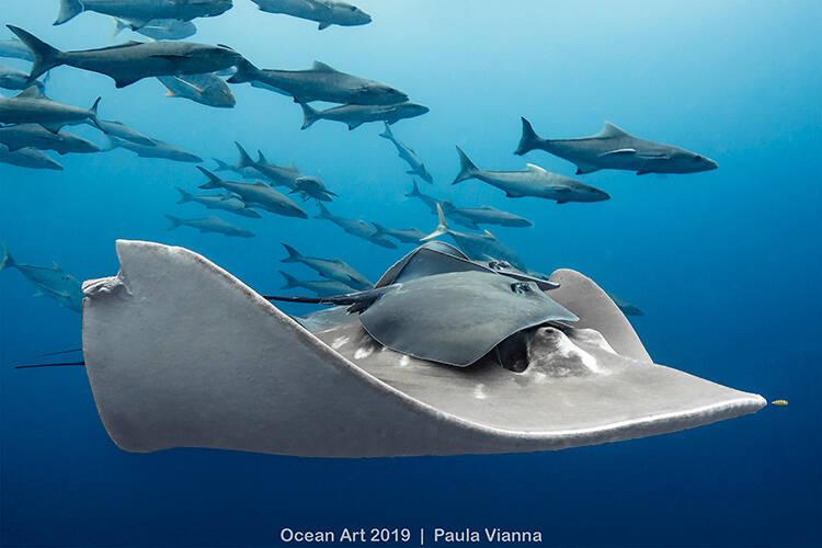 Categoria Vida Marinha: Queensland (Austrália) - Paula Vianna