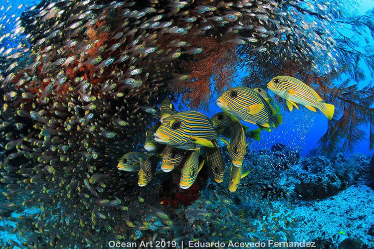 "Categoria ""Reefscapes"": Raja Ampat (Indonésia) - Eduardo Acevedo Fernandez"