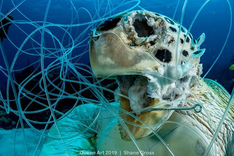 Categoria Preservação: Eleuthera (Bahamas) - Shane Gross