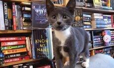 Livraria no Canadá tem gatinhos para os brincar com clientes