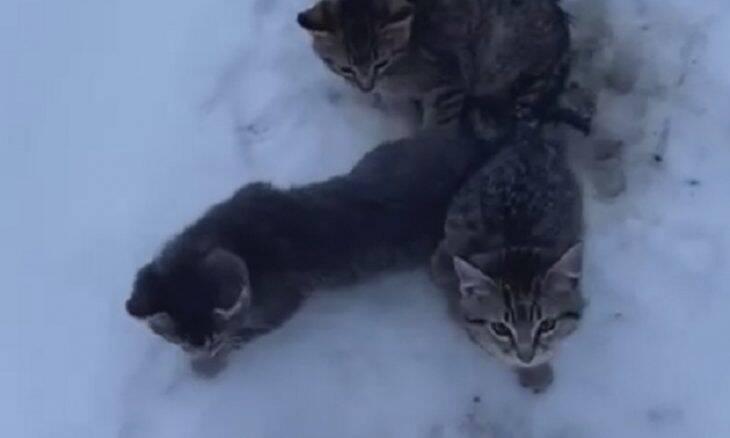 Homem usa café para resgatar gatinhos perdidos na neve