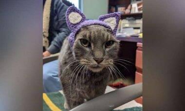 Após perder orelhas, gato ganha novas de crochê