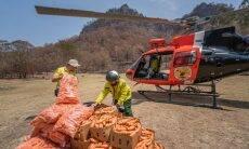 Austrália usa helicópteros para ajudar animais afetados por incêndios