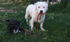 Mesmo cego e surdo, cão cuida de outros animais resgatados