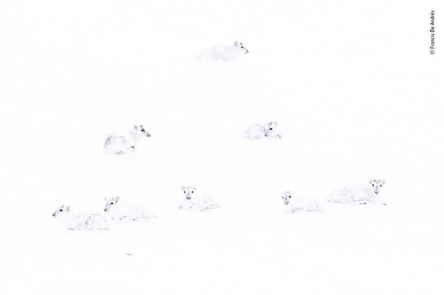 """""""Spot The Reindeer"""", Francis De Andres (Espanha)"""