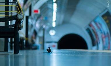 Foto de briga de ratos ganha concurso na Inglaterra