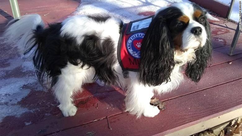Cidade nos EUA tem cachorros e bode como candidatos a prefeito