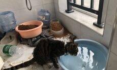 Protetores arrombam casas para salvar animais abandonados por surto de covid-19