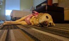 Hotel oferece companhia canina para hóspedes