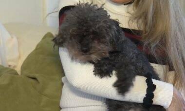 Cadela cega é encontrada 28h após ter sido levado por falcão