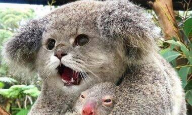 Como seria se todos os bichos tivessem cara de gato