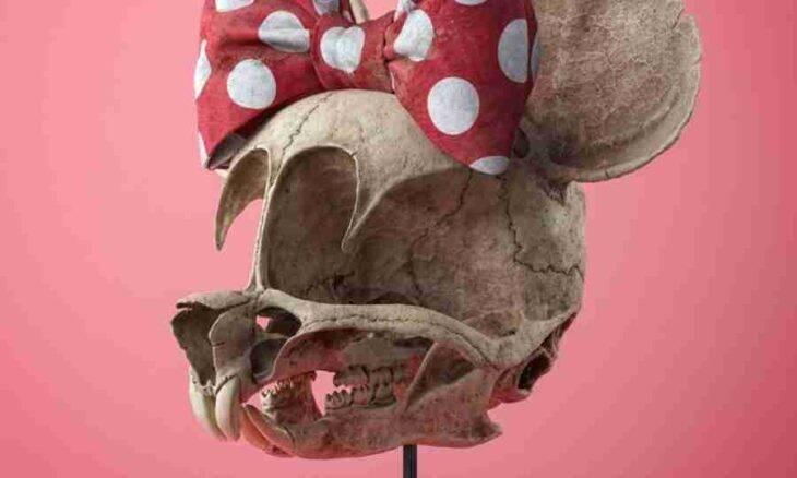 Artista imagina como seriam os crânios dos personagens de desenhos