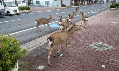 Com humanos em quarentena, cidades são invadidas por animais