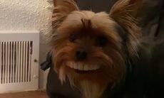 Cachorro rouba dentadura e ganha sorriso hilário