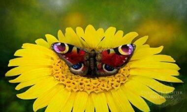 Artista visual transforma mulher em borboleta