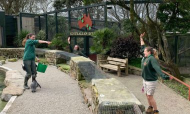 Para cuidar dos animais, funcionários passam a quarentena dentro de zoológico