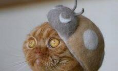 Gatos ganham gorros feitos comos próprios pelos