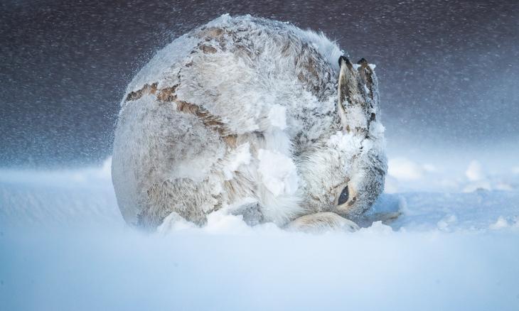 Concurso reúne as fotos mais impressionantes da natureza