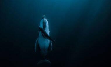 Foto de baleia dormindo leva prêmio de US$ 120 mil em concurso