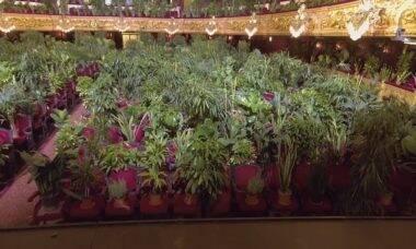 Ópera de Barcelona reabre com concerto para 2 mil plantas