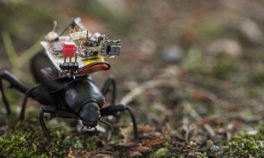 Pesquisadores desenvolvem câmera de vídeo para insetos