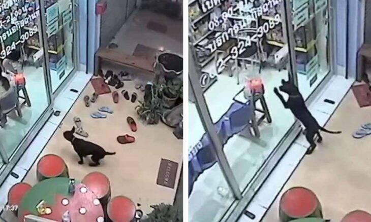 Filhote de cachorro se perde e vai procurar ajuda em veterinário