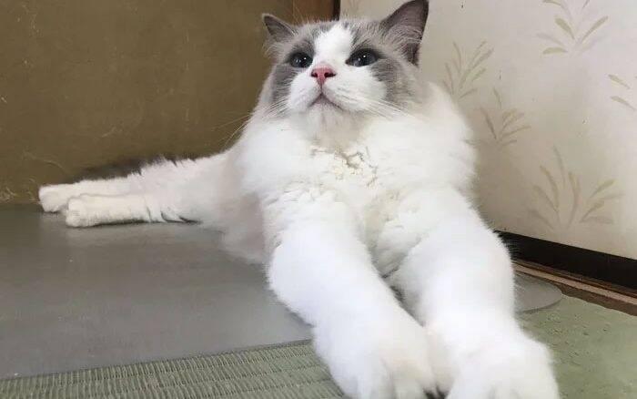 Hospedaria no Japão oferece companhia de gatos para os hóspedes