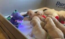 Filhotes de cachorro são hipnotizados por dragão de pelúcia