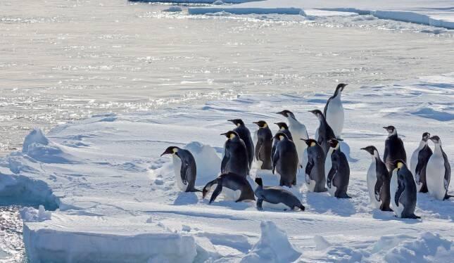 Satélite revela novas colônias de pinguins na Antártida