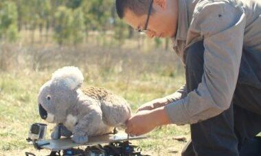 Coala de pelúcia vira ferramenta para investigar animais reais
