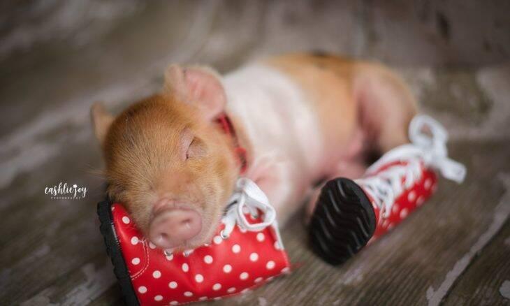 Fotógrafa viraliza com ensaio newborn de leitão