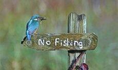 Concurso reúne fotos mais engraçadas com animais silvestres