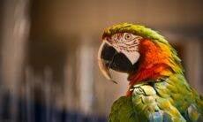 Paragaios são escondidos por zoológico após xingarem visitantes