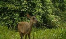Área da Ford em Tatuí serve de habitat para 368 espécies de animais