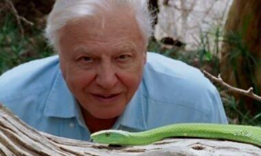"""Documentário """"David Attenborough e Nosso Planeta"""" estreia no domingo (4) na Netflix"""