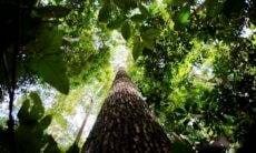 https://agenciabrasil.ebc.com.br/geral/noticia/2020-10/produtores-rurais-vao-receber-por-florestas-conservadas-na-amazonia