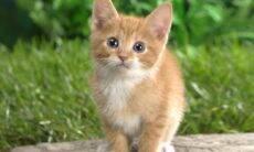 """Ver animais """"fofos"""" ajuda a reduzir estresse, aponta estudo"""