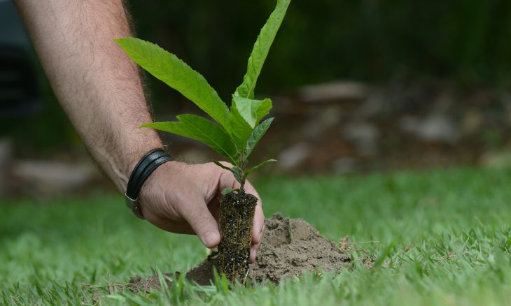 Mercedes-Benz vai plantar 13 mil árvores no Brasil