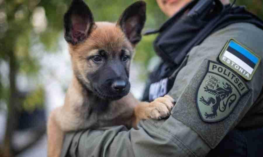 Cão policial chama a atenção pela fofura
