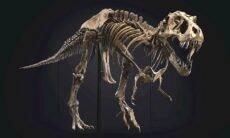 Fóssil de T-Rex é vendido por US$ 31,8 milhões e bate recorde
