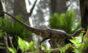 Pesquisadores brasileiros reconstroem cérebro de dinossauro