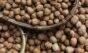 Consumo de nozes pode contribuir para o aumento da fertilidade
