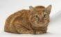 Gato Mano espera por uma família no Centro de Adoção de Cães e Gatos de SP