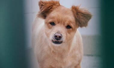 Charles Henrique espera por uma família no Centro Municipal de Adoção de Cães e Gatos (SP)