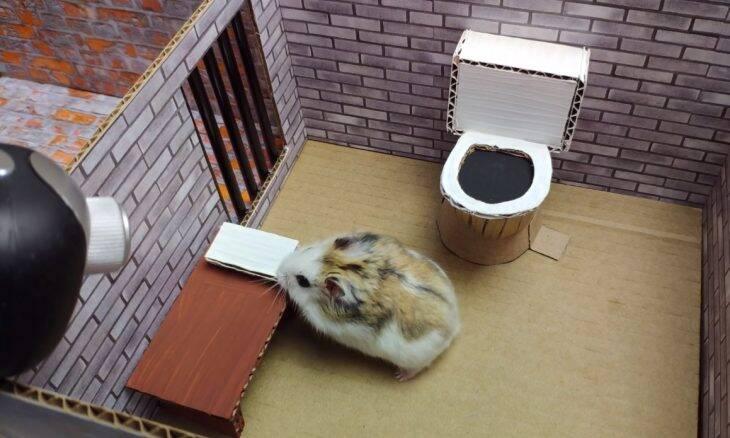 Vídeo de hamster em labirinto nível hard já soma mais de 55 milhões de visualizações