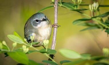 Estudo aponta que canto de pássaros pode melhorar sensação de bem-estar